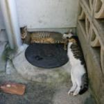 近所の野良猫がテトリスみたいな形で寝ていた。