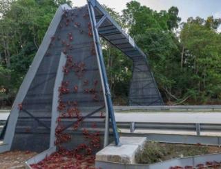 カニ専用の橋すき