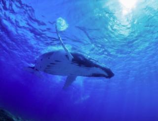 ザトウクジラの海。