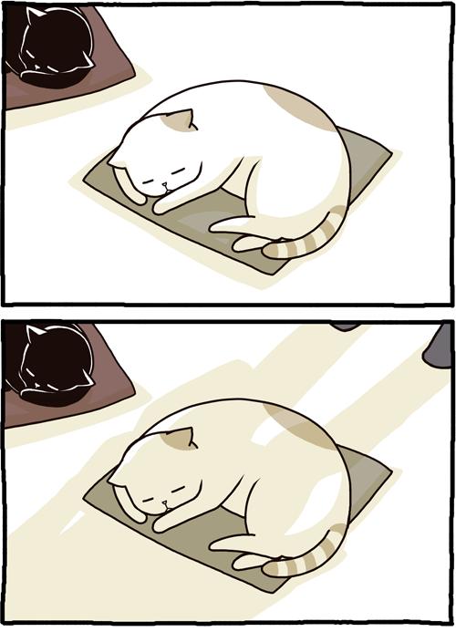 職場の猫、帰宅のためなら協力的。