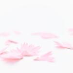 【ふわっ】削れば削るほど美しい花びらが生まれる鉛筆